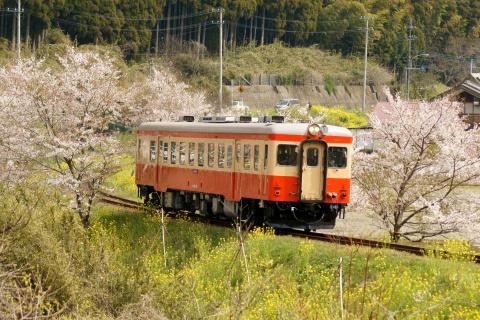 【いすみ】キハ52-125 試運転