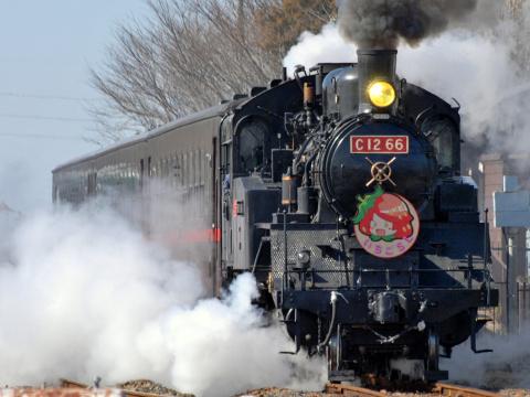 【真岡】「おとちゃんいちごSL列車」運転