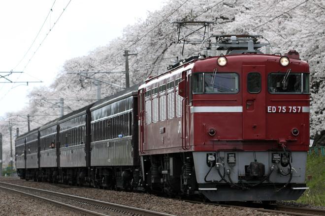 【JR東】快速「レトロ花めぐり号」運転
