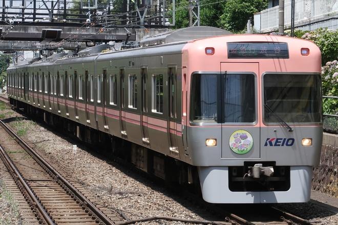 【京王】井の頭線で「東松原駅 あじさいライトアップ」ヘッドマーク掲出