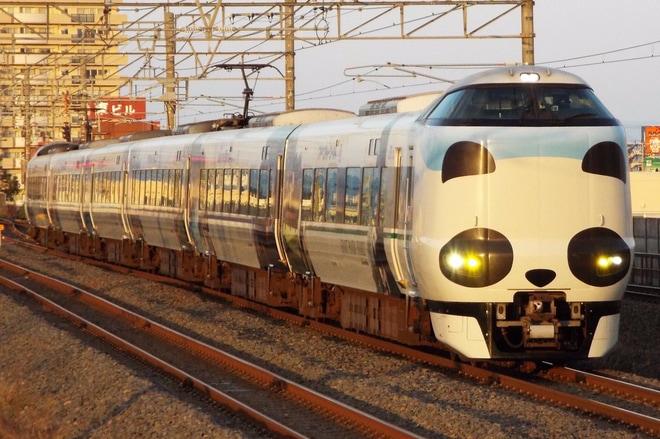 【JR西】パンダくろしおで行く紅葉列車